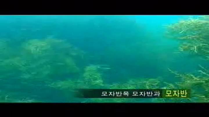 (04/25 방영) 창사10주년특별기획<新 어부사시사> 2.제주바다의꿈오분자기