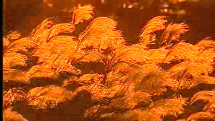 (03/06 방영) 다큐멘터리<황소개구리> – 황소개구리 그 365일의 기록