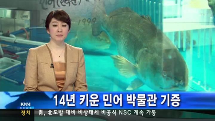 14년 키운 민어, 해양박물관으로