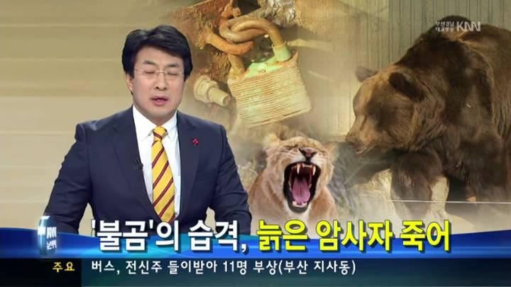 진양호 동물원 곰이 사자 공격.. 안전관리 구멍