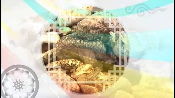 (02/27 방영) 대보름맞이 우리농산물 한마당 (생중계)