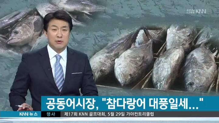 사상 최대 참다랑어 위판