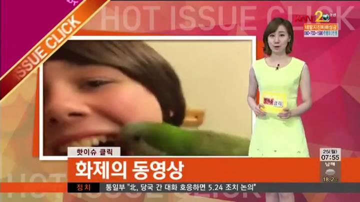 핫이슈-화제의 동영상-귀여운 이빨 요정 '앵무새'
