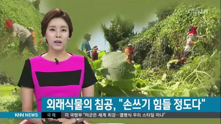 토종 위협하는 외래식물들 급속 확산