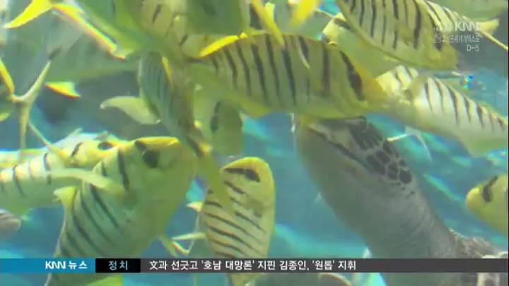 (03/27 방영) 영상뉴스