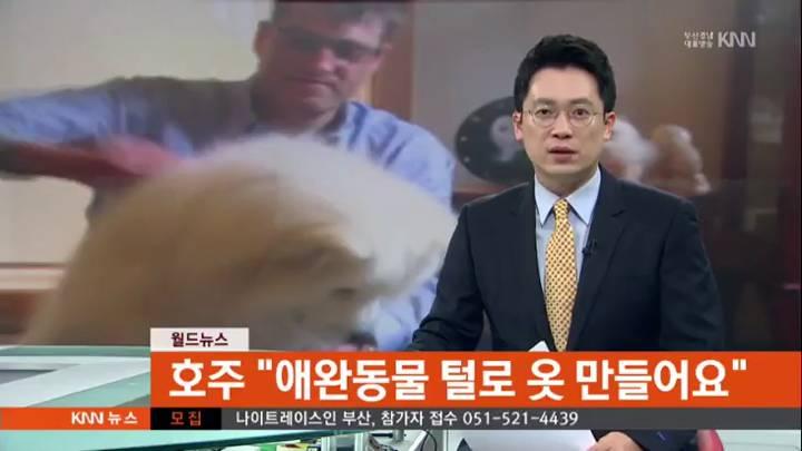 """호주 """"애완동물 털로 옷 만들어요"""""""