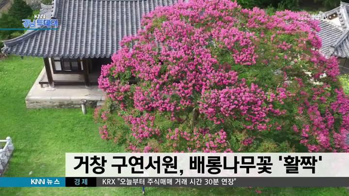 거창 구연서원, 폭염 속 배롱나무꽃 '활짝'