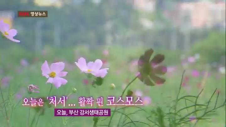 (08/23 방영) 영상뉴스