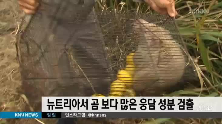뉴트리아서 곰 보다 많은 웅담 성분 검출