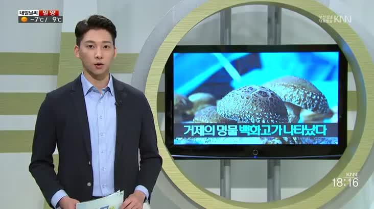 (02/01 방영) 지금은 거제 백화고 시대, 채희복 씨의 달리는 전시관