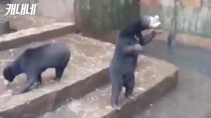 [캐내네]잔인한 동물원
