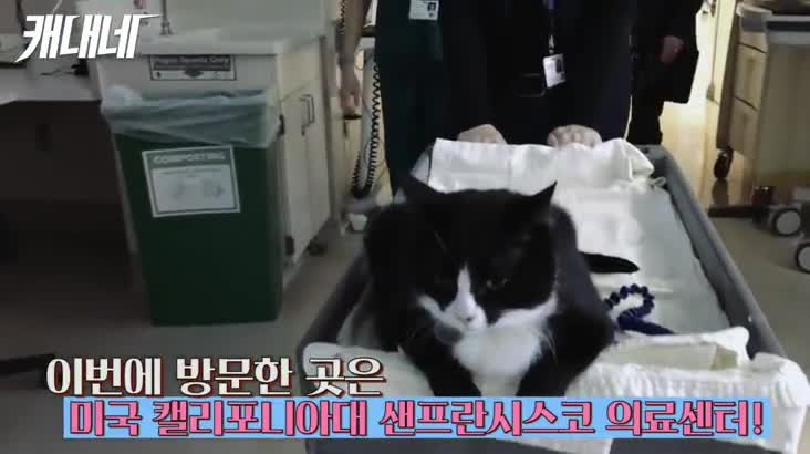 [캐내네]직업 고양이??