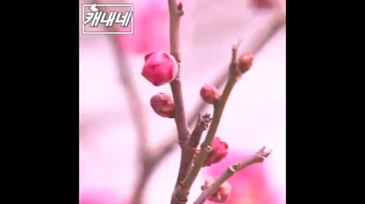 [캐내네]봄이 오면 생각나는 사람은?