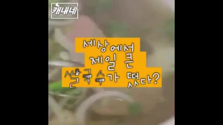 [캐내네]초대형 쌀국수