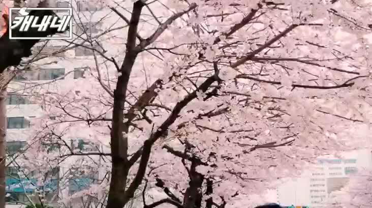 [캐내네]조금만 있으면 만날 수 있는 부산 풍경