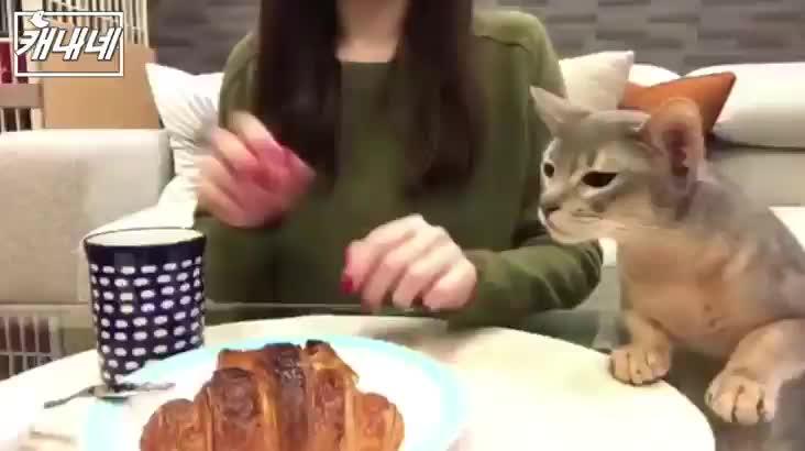 [캐내네]나도 먹을고양~