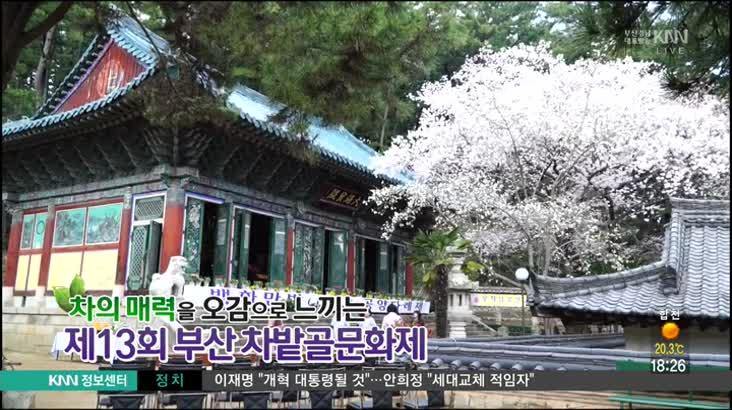 (04/03 방영) 제 13회 차밭골 문화제