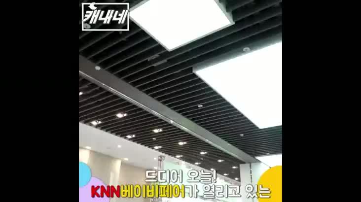 [캐내네]KNN베이비페어 현장