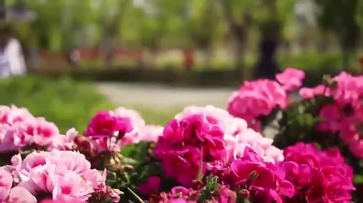 4월의 봄, 부산시민공원