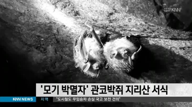'모기 박멸자' 관코박쥐 지리산 서식