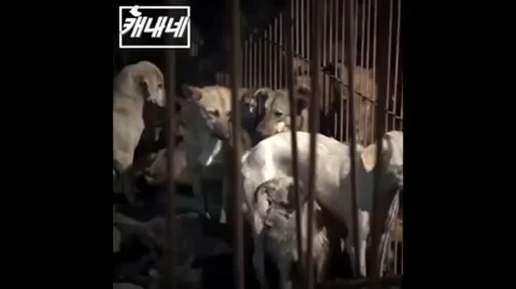 [캐내네]논란속 중국 위린시 개고기 축제
