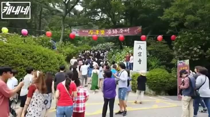 [캐내네]실시간 태종사 수국축제 인파