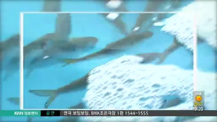 (07/19 방영) 삼천포 정서방 ☎055-835-5349