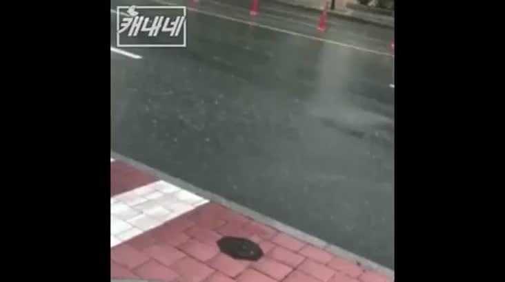 [캐내네]실시간 검색 부산날씨 1위
