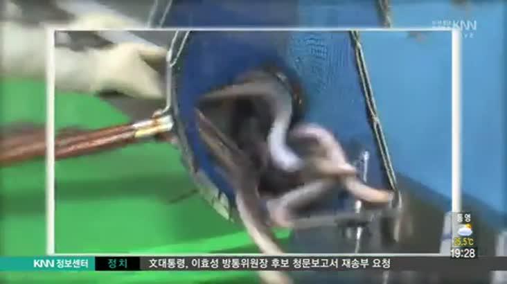 (07/26 방영) 사천시 실안동 풍개참숯장어구이 ☎055-833-1888