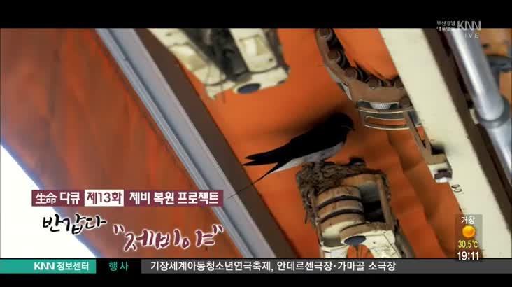 (08/01 방영) 제비복원프로젝트