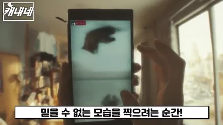 [캐내네]부산국제광고제-GRAVOTU CAT