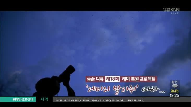 (09/05 방영) 제비복원프로젝트