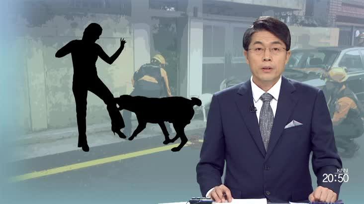 """오늘의 시선(""""물지 않는 개는 없습니다"""" )"""