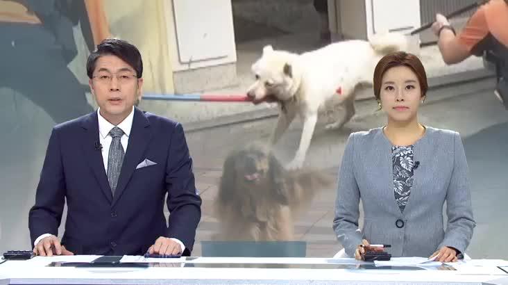 (09/20 방영) 뉴스아이