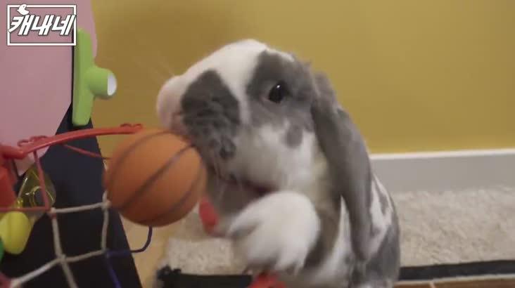 [캐내네]토끼가 덩크슛을??