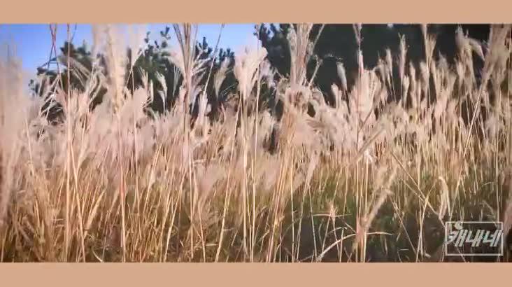 [캐내네]장산 억새밭