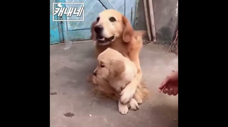 [캐내네]손대지마!!