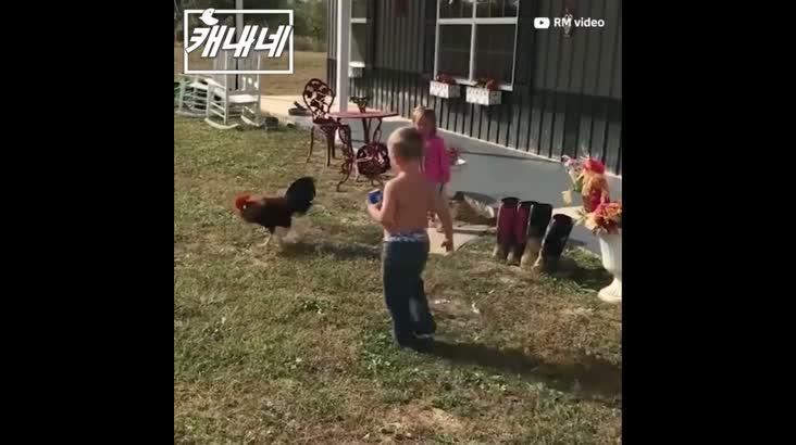[캐내네]닭을 잘못 건드린 오빠