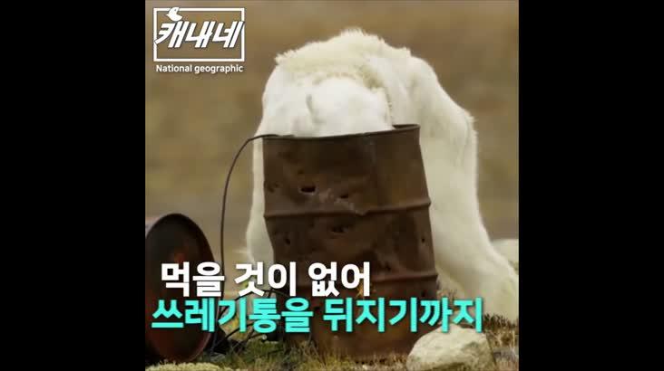 [캐내네]앙상하게 마른 북극곰