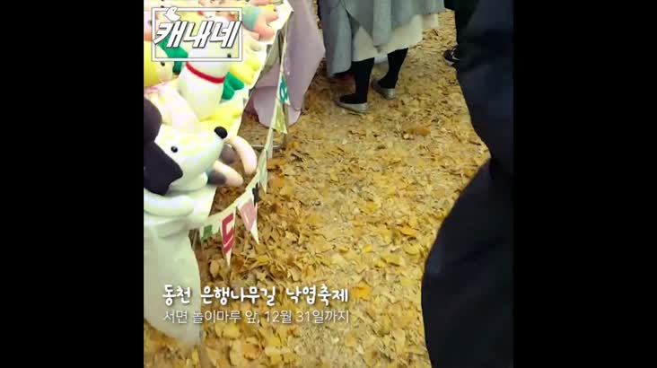 [캐내네]동천 은행나무길 낙엽축제