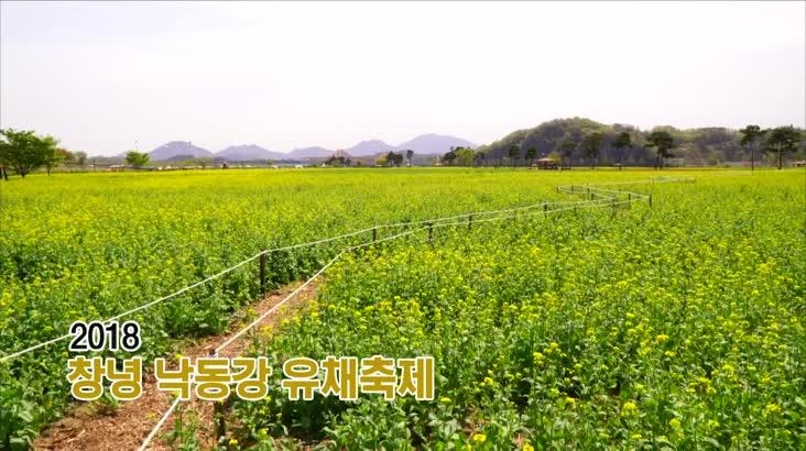 (04/13 방영) 풍물 (2018 창녕 낙동강 유채축제 전편)