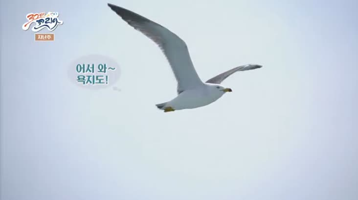 (05/19 방영) 뛰뛰빵빵 로그인 코리아