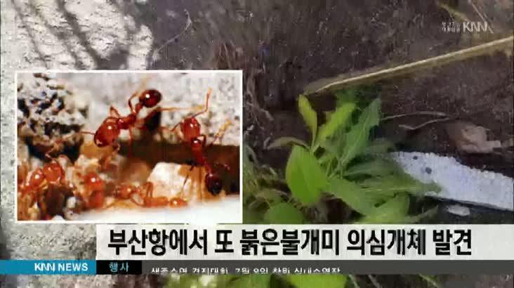 부산항에서 또 붉은불개미 의심개체 10여마리 발견