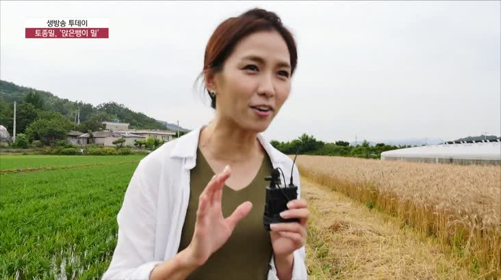 (06/26 방영) 풍물 (토종밀, ''앉은뱅이 밀'')