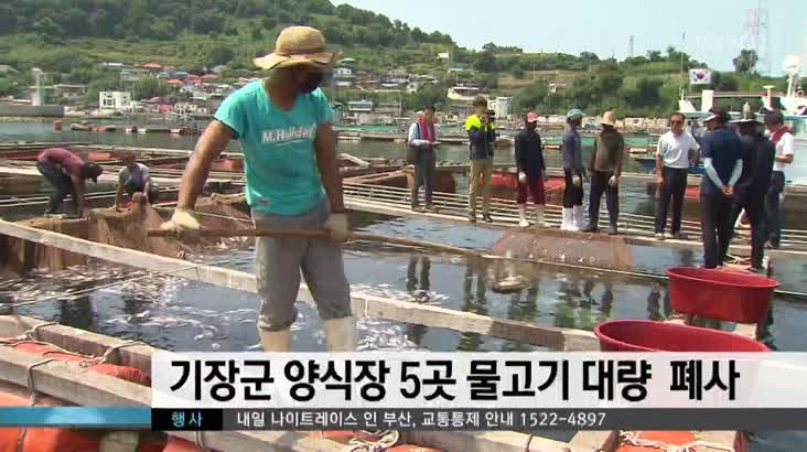 기장군 양식장 5곳 물고기 대량  폐사