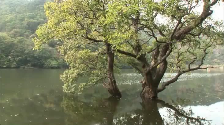 (05/16 방영) KNN창사특집 낙동강, 생명의 버드나무