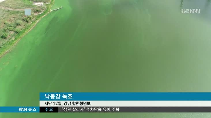 폭염에 낙동강 녹조 창궐…상수원 위협