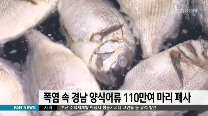 폭염속 경남 양식어류 110만여마리 폐사