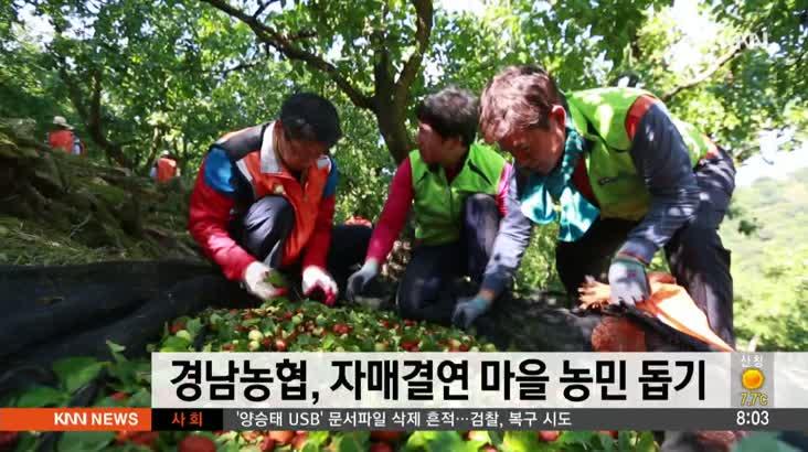 경남농협, 자매결연 마을에서 일손 돕기 활동
