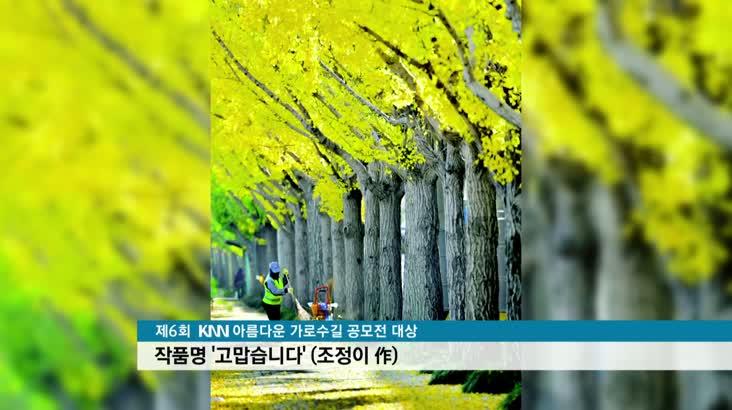'한폭의 그림' 아름다운 가로수길